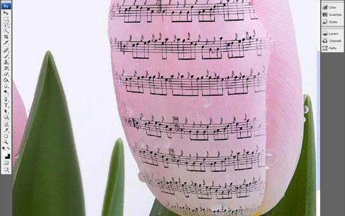Эффект музыкальных нот на цветах